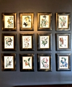 SET OF 12 CHINESE EXPORT PITH PAINTINGS OF BUTTERFLIES AND FLOWERS